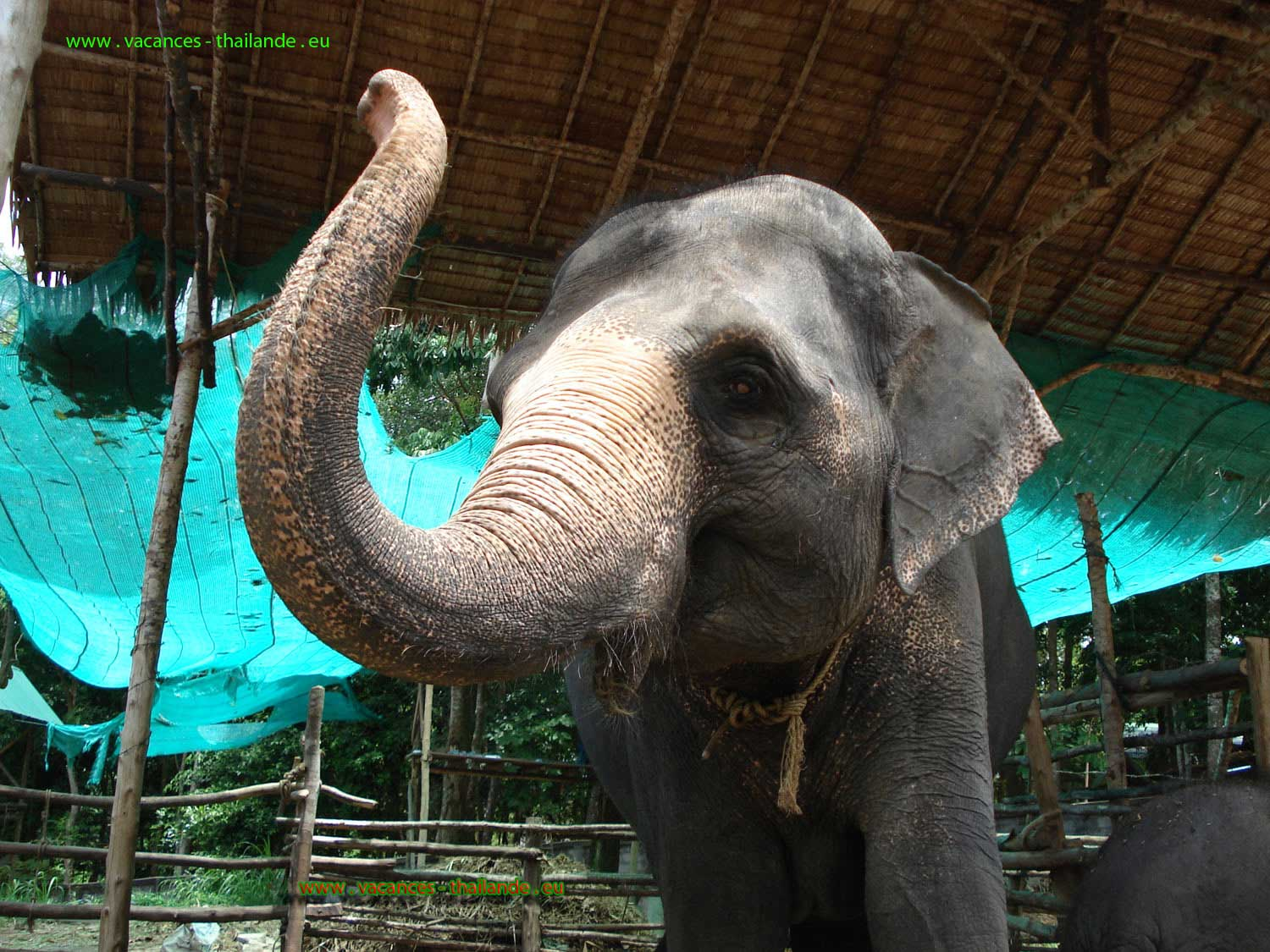 villa rental Paris with pool and ride with elephants on the island of Koh Samui in Thailand